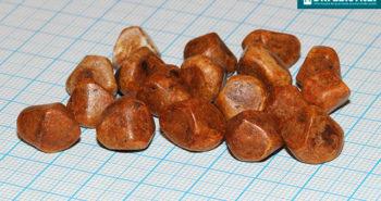 Pedra na vesícula - Por Dr Fabio Atui